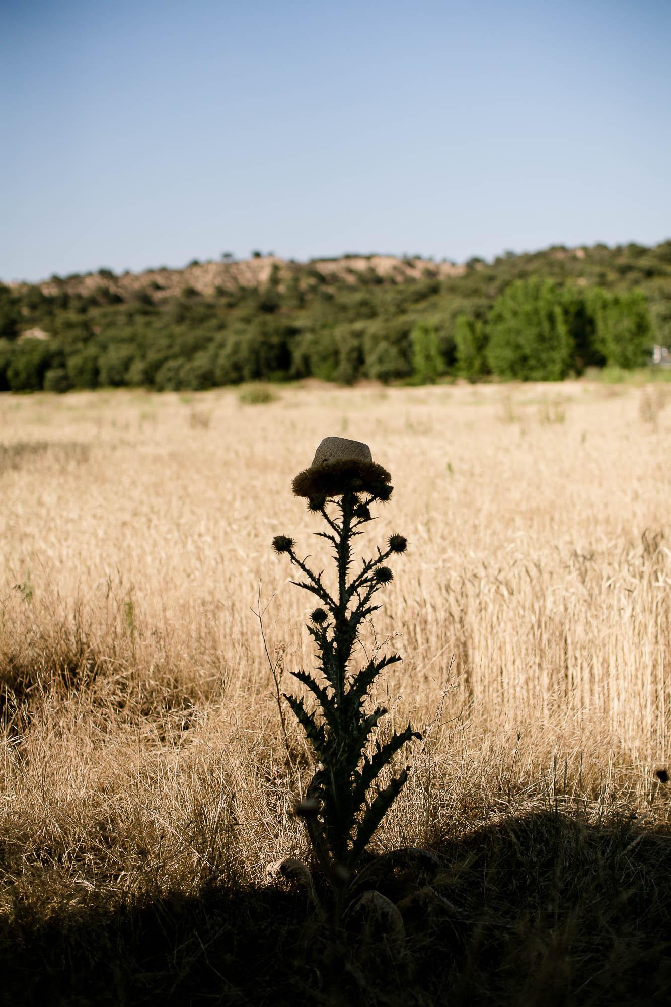 El sombrero de la novia en medio del campo