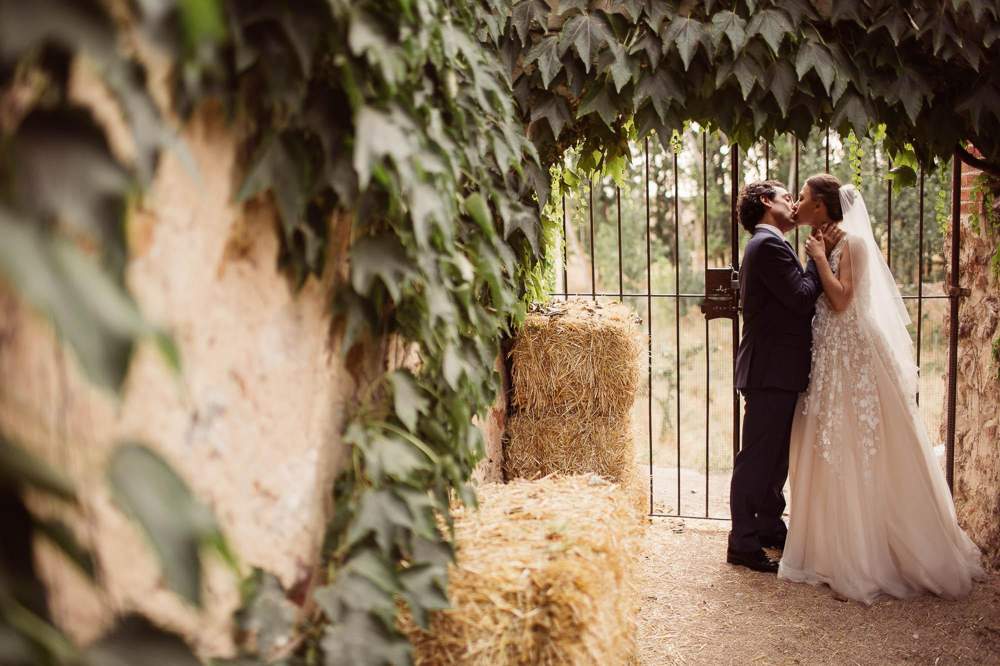 Los novios se besan en el patio de enredadera verde